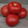 Семена розового томата КИБО F1 фирмы Китано
